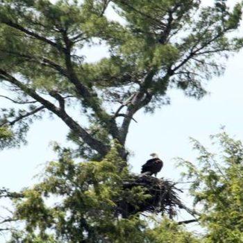 eagle nest 025