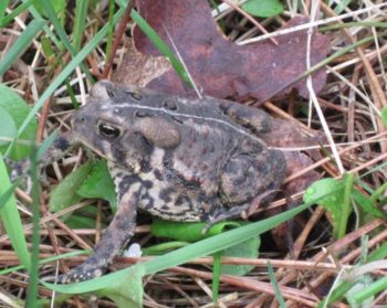 toad13